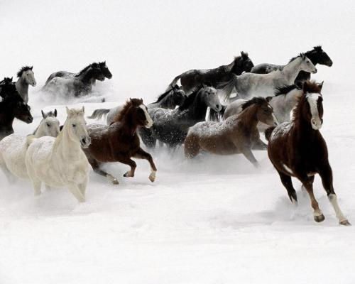 horsesjpeg